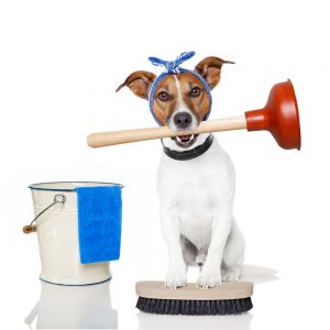 House Cleaning Services Los Angeles-5