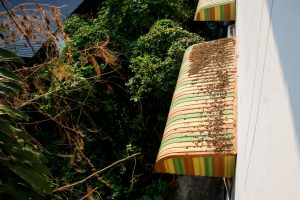 A multicolored awning overlooking greenery