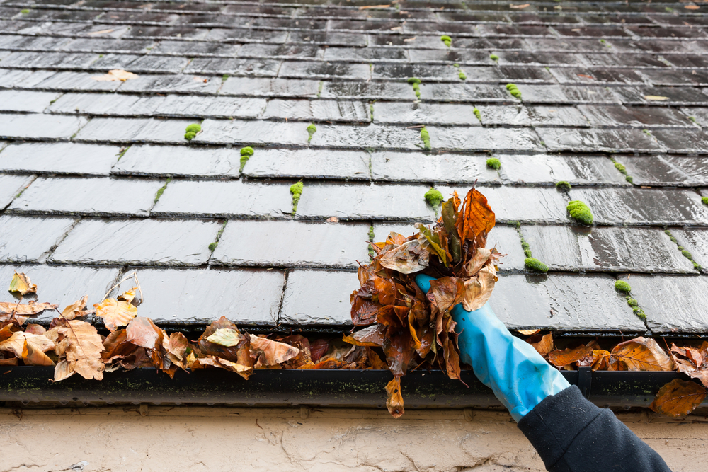 gloved hand cleaning leaf matter out of a roof's gutter